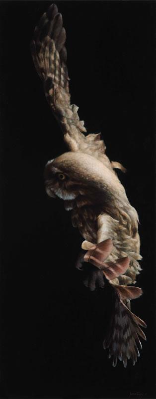 Artist >> James Guppy - Artist - Owl Study